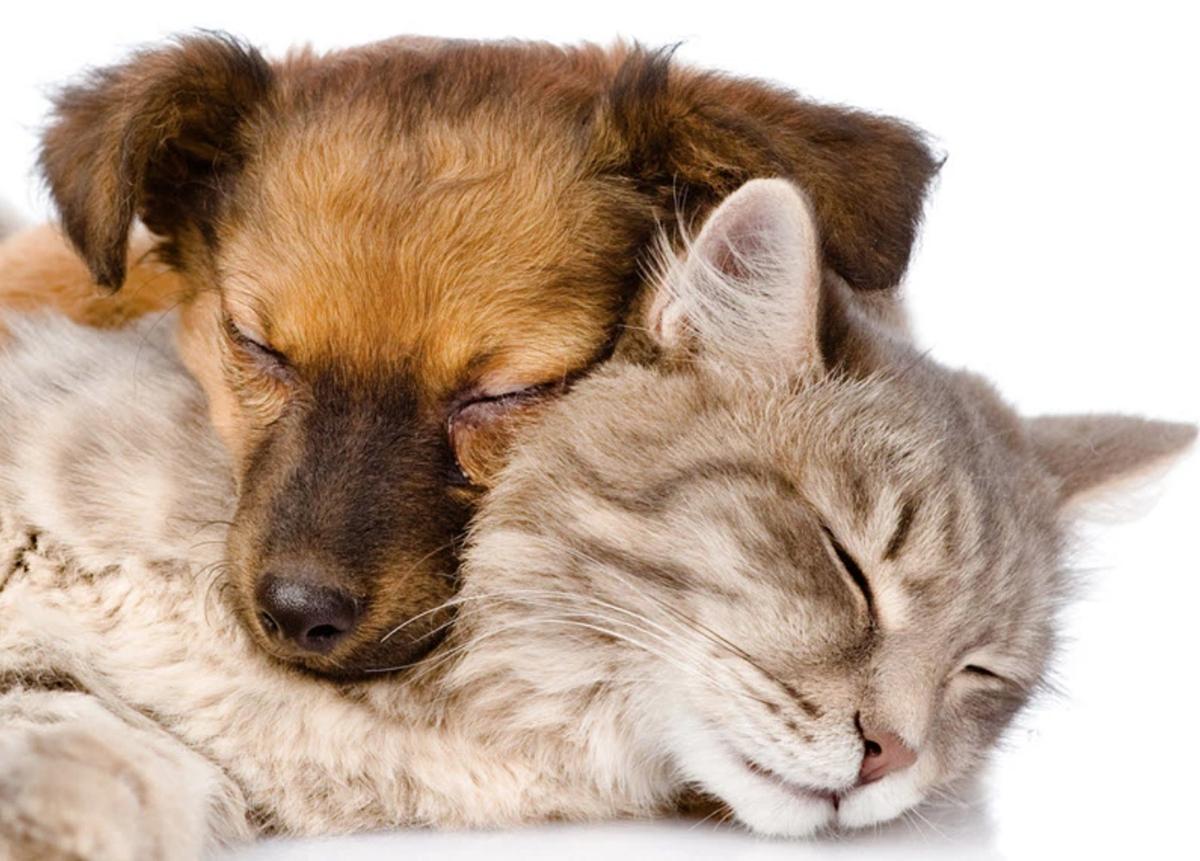 Daybreak Suites Pet Friendly